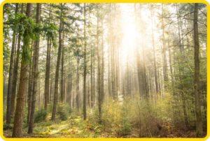 Solar Produkte und Produkte für die Holzheizung