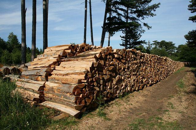 Holzstapel im Wald zur Gewinnung von Holzenergie